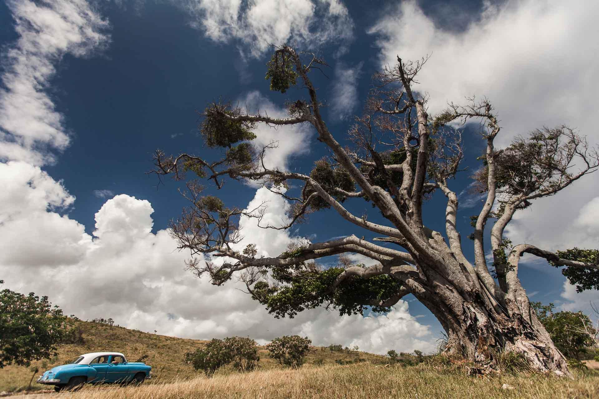 Oldtimer und alter Baum auf Kuba